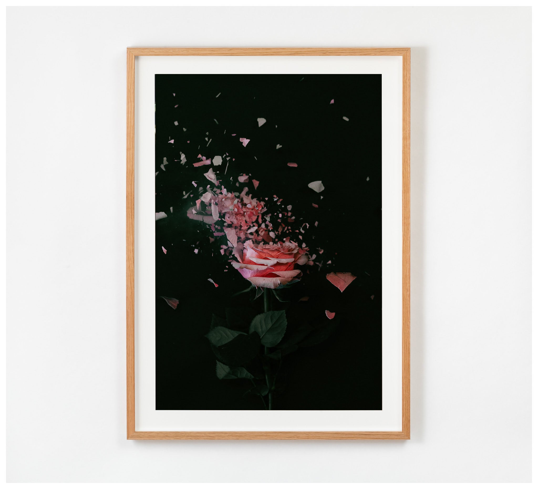 Fractured Flora - Blush Rose #4 - Framed