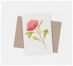 Ink & Spindle - Greeting Cards - Set of 3 - Proteas