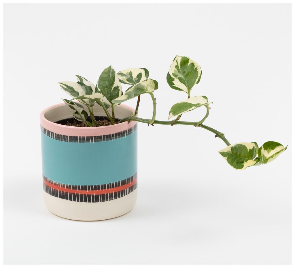 Trade the Mark - Liquorice All Sorts - Planter
