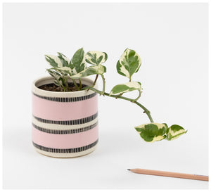 Trade the Mark - Stitched Up - Planter