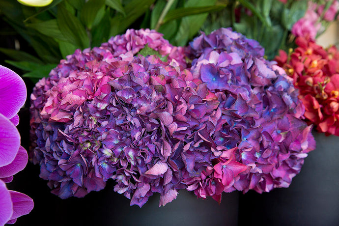 Hydrangea Flowers - the hot tip for making someone's day right now