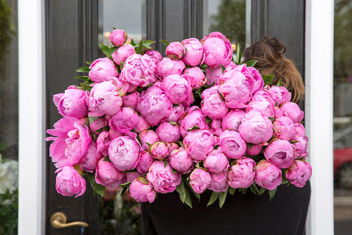 When are peonies in season?
