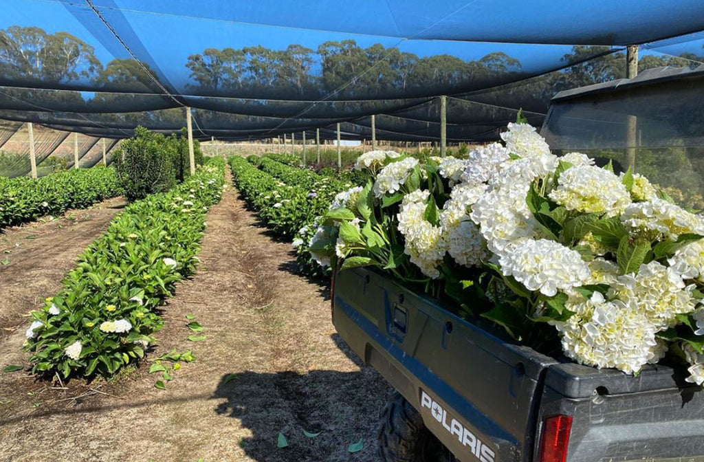 White flowers being collected on flower far for delivery across Melbourne