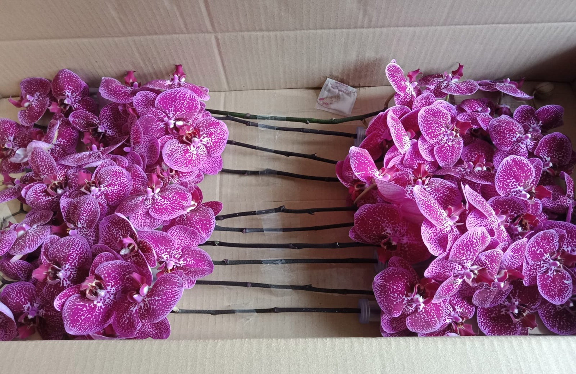 Box containing orchid flowers in pink