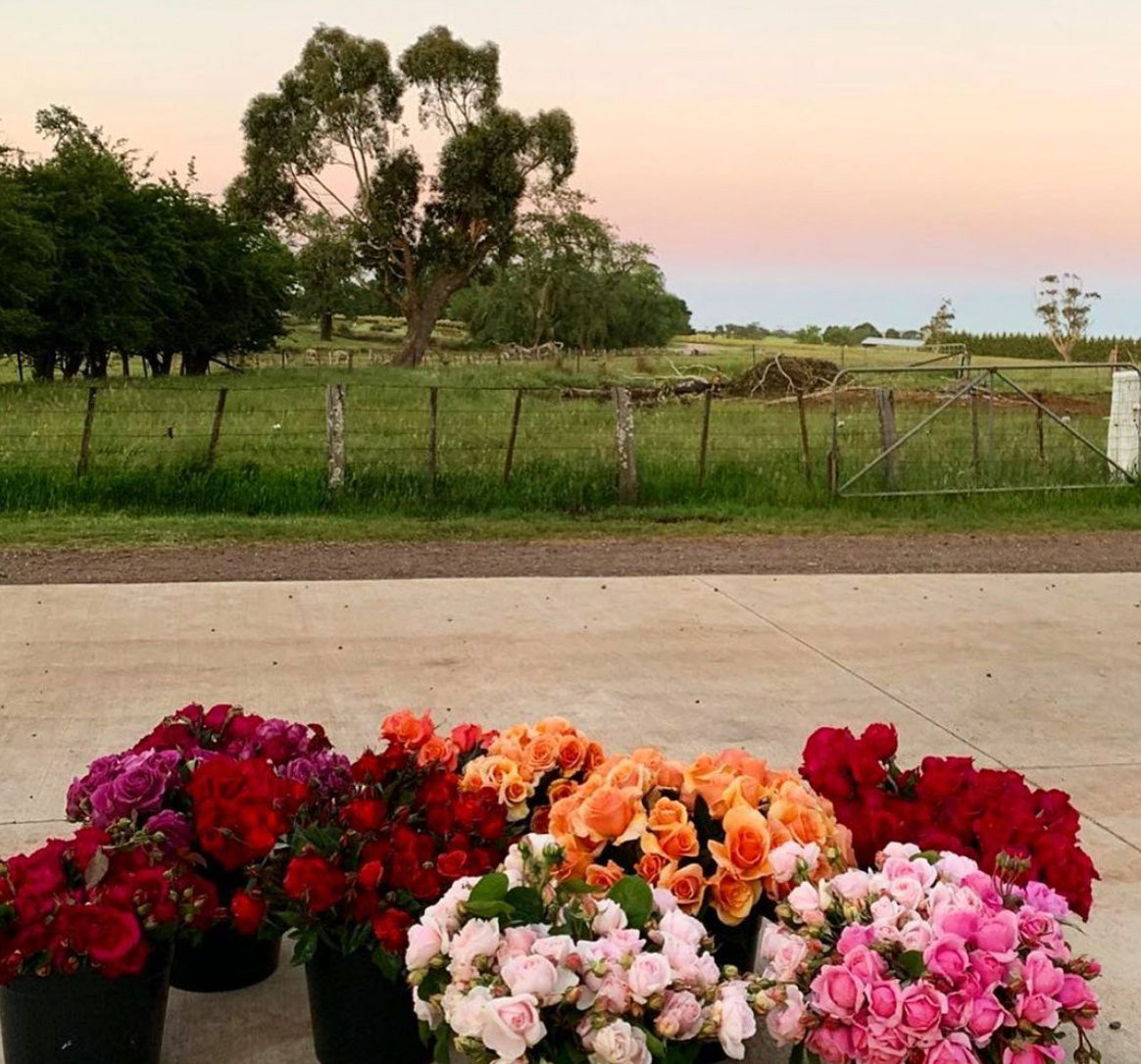 Farm fresh cut flowers ready for delivery across Melbourne