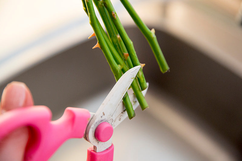 Florist cutting flower stems to make them last