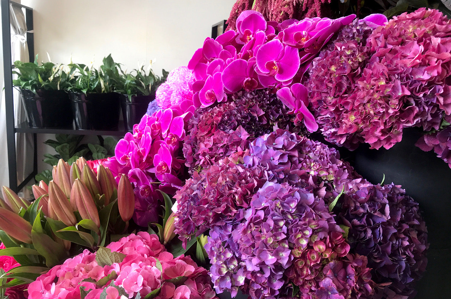 Melbourne florist with hydrangea being displayed on shop stands