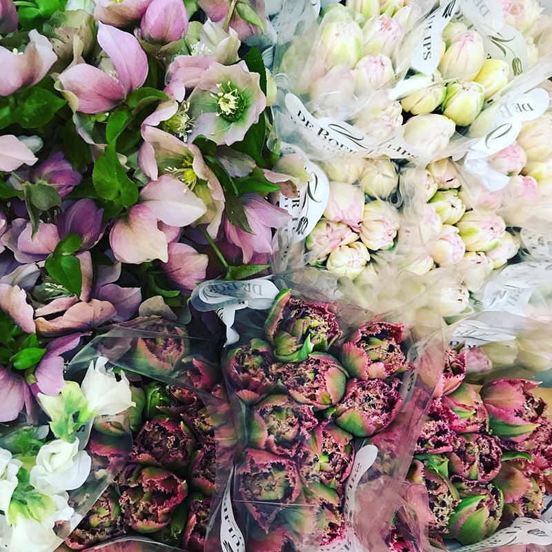 White pink and red winter blooms ready for sale at Melbourne Florist