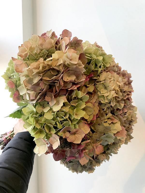Hand holding a bunch of hydrangea flowers