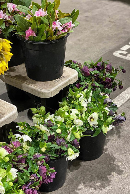Buckets of flowers ready for sale at the Melbourne Flower Markets
