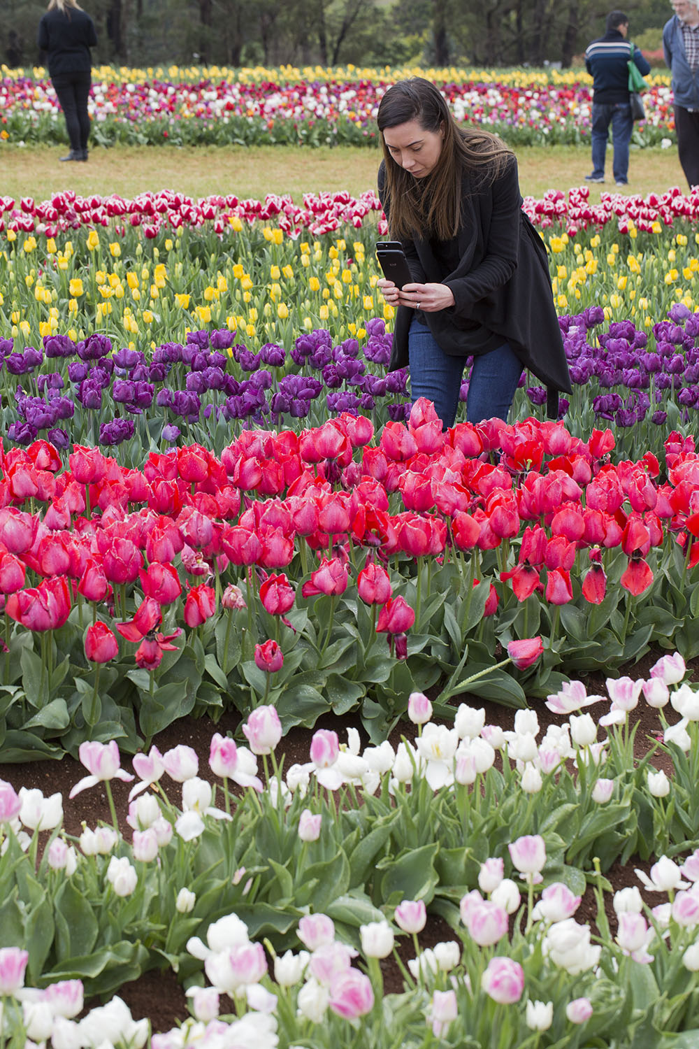Kate Hill Taking Photos of Tulips at Tesselaar Tulip Festival
