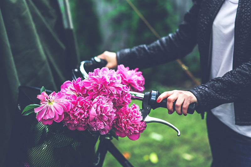 Peony flowers on front of push bike