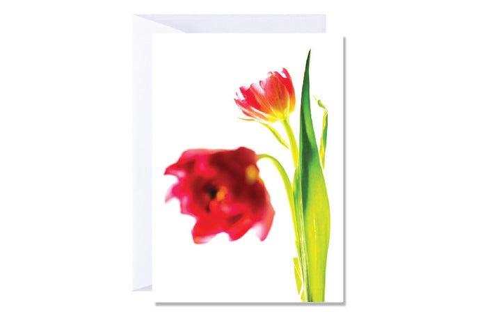 'Red Tulips' Kate Hill Greeting Card