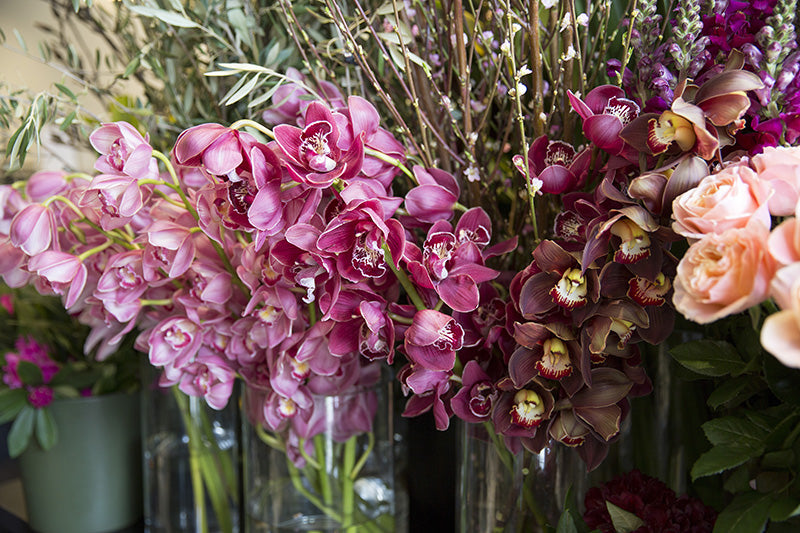 Cymbidium Orchid Flowers