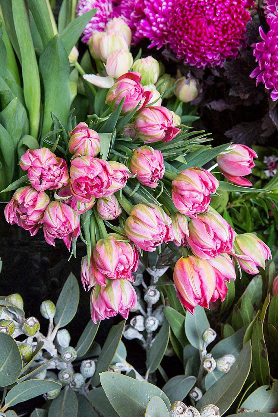 Frilly Tulips