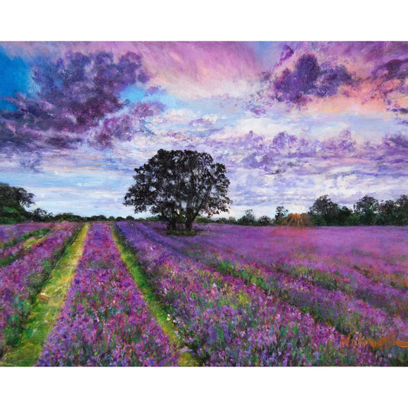California Lavender in Pink - Kathryn Silvera Art