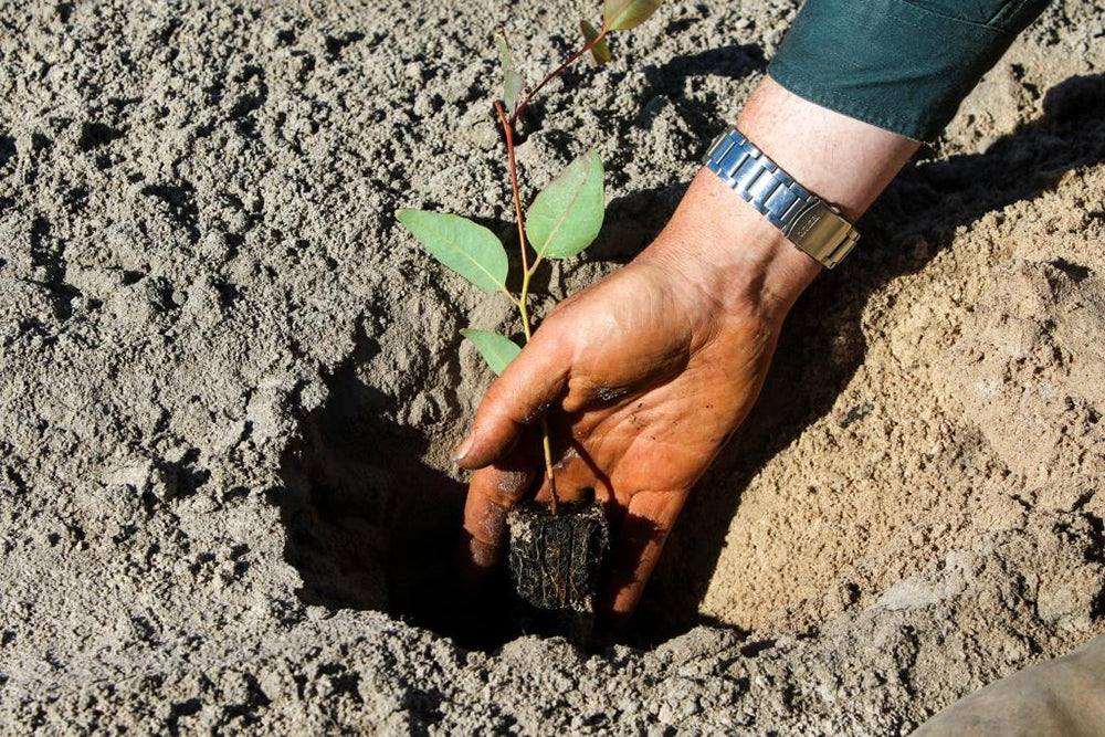 PLANT A TREE PIC