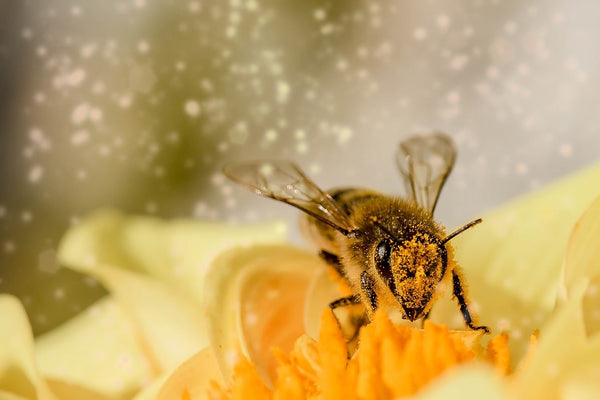 abeilles pollinisation resonance de schumann