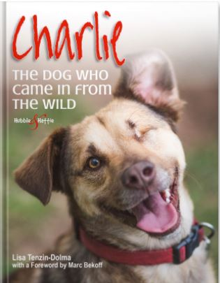 Charlie The dog who came in from the wild-who lived the first 18 months of his life in the wild