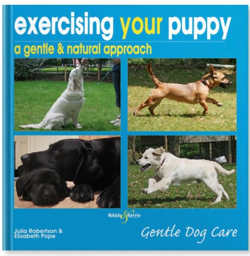 Exercising your puppy - A gentle & natural approach