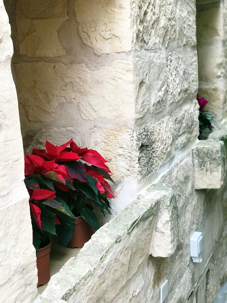 outside building stone wall flower