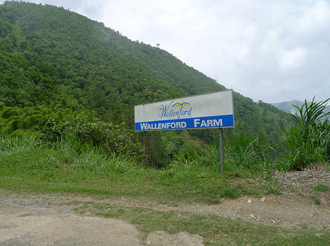 Wallenford, Jamaica Blue Mountain