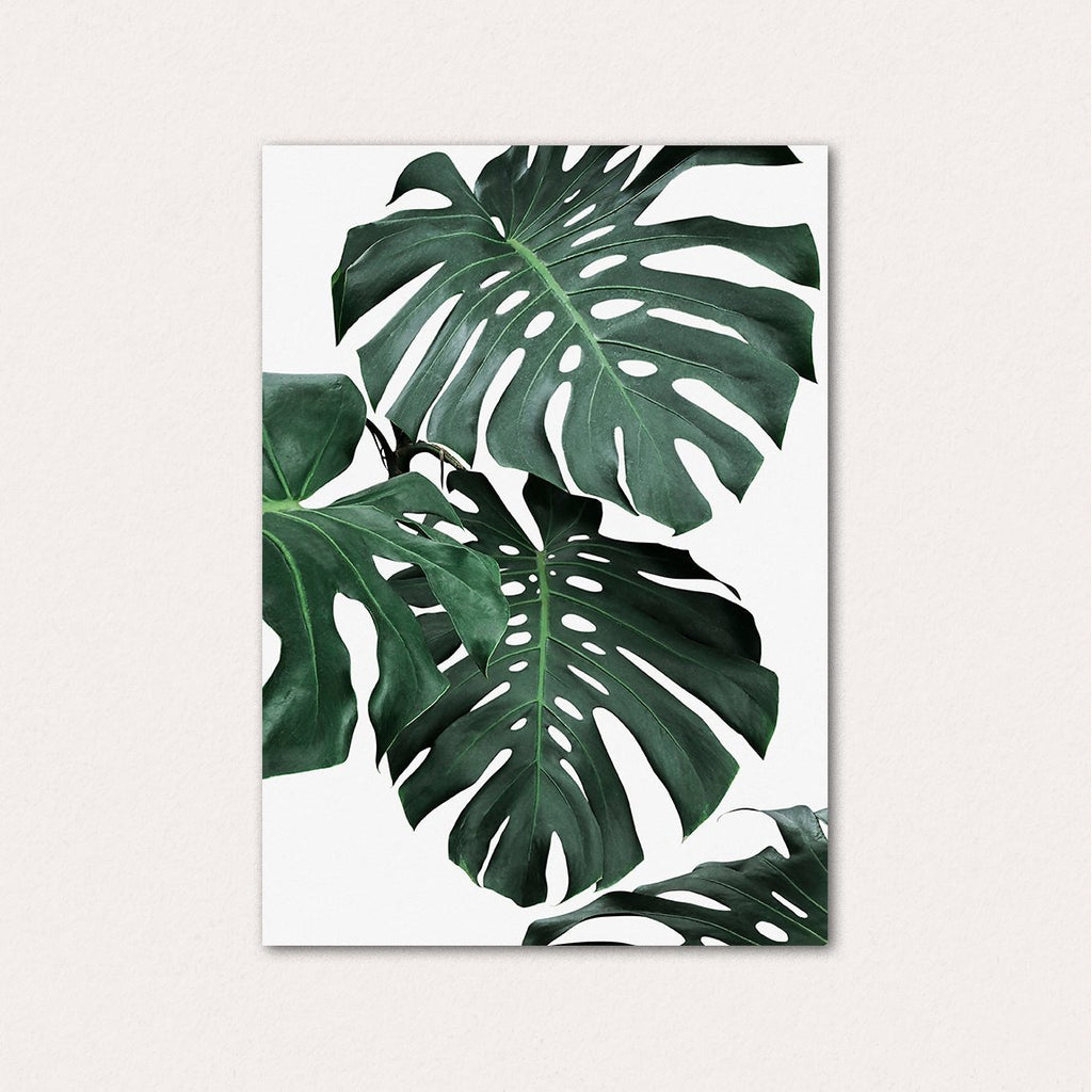Monstera Set