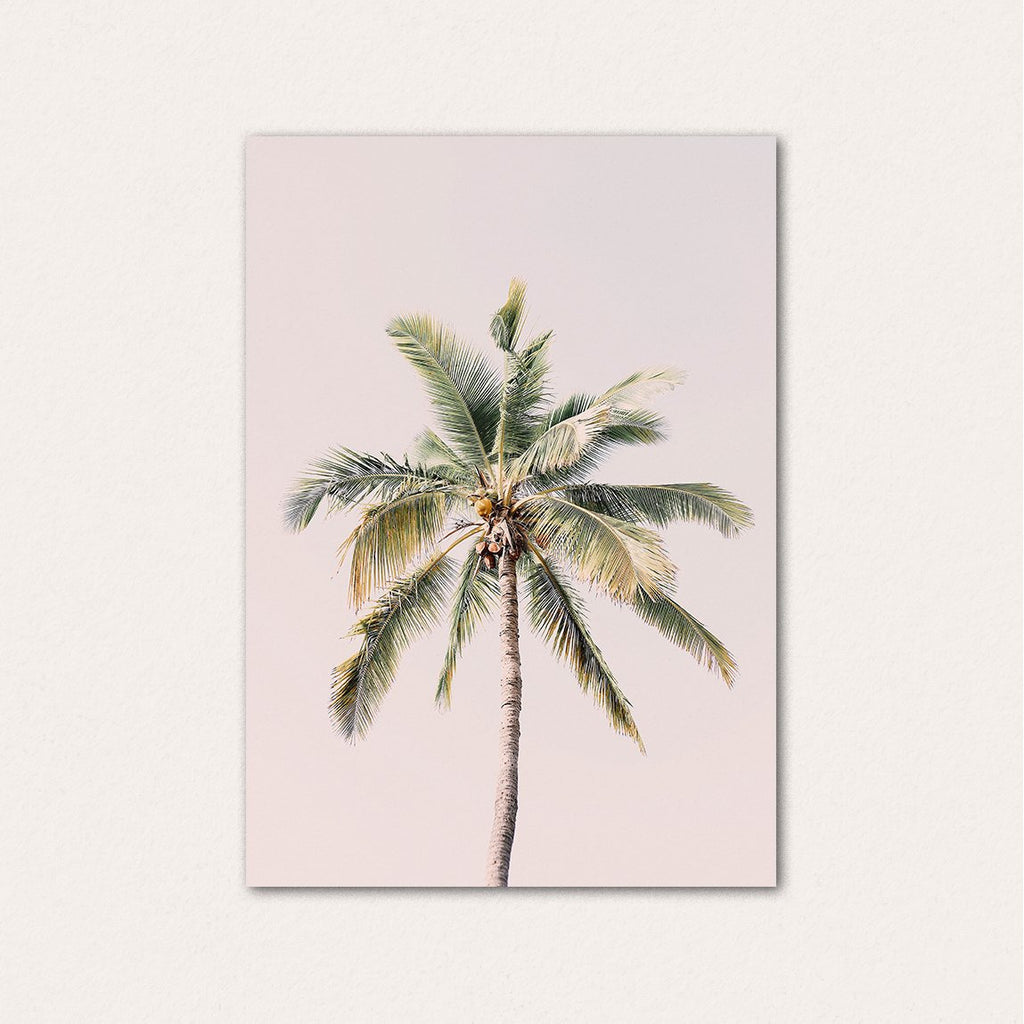 Palm tree in blush