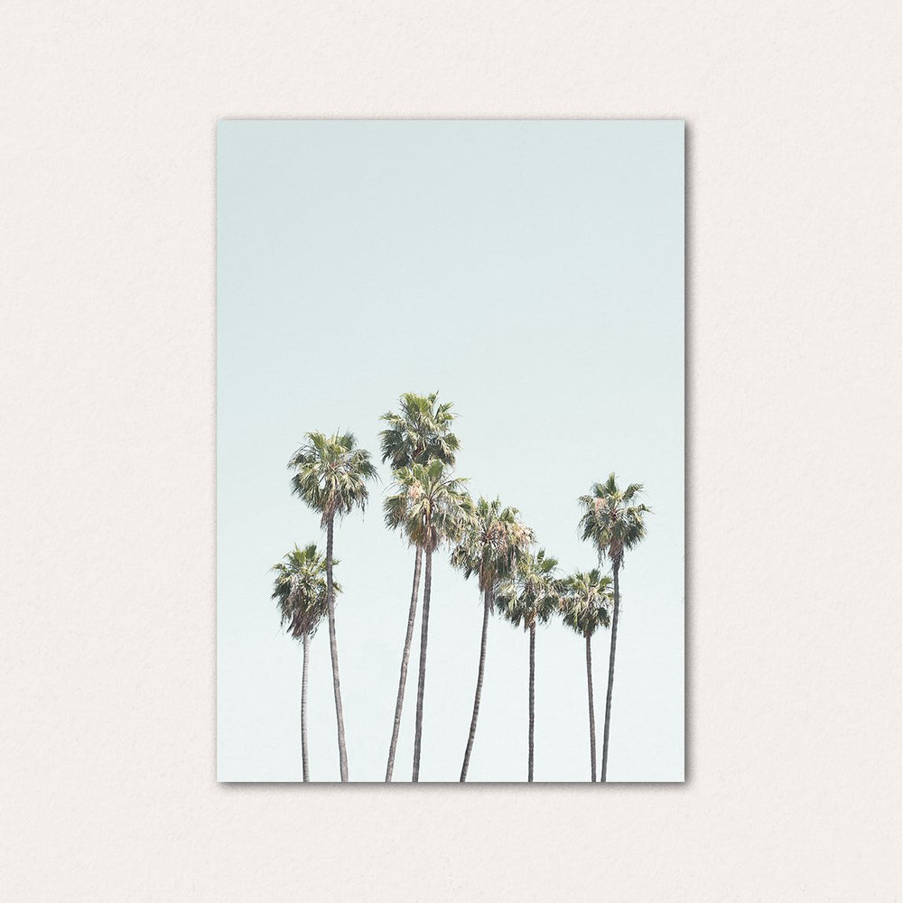 California Palm Trees II