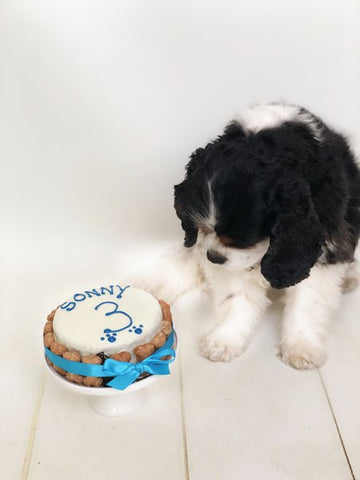 Personalised Dog Birthday Cake Medium 5""