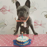 Personalised Dog Birthday Cake Mini 4""