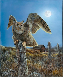Picture of Night Owl