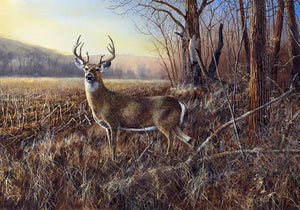 Picture of Bluff Country Buck