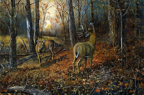 Picture of Signs of Autumn Original Oil