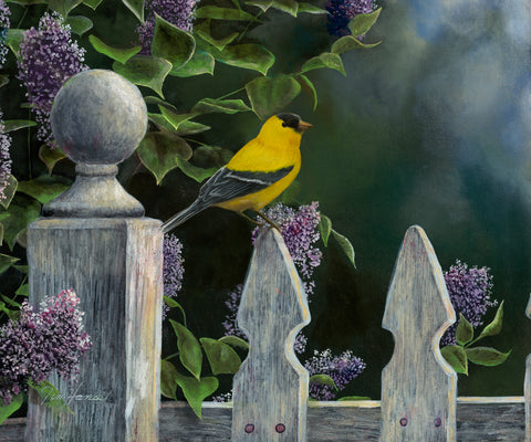 Bird's Eye View - Goldfinch