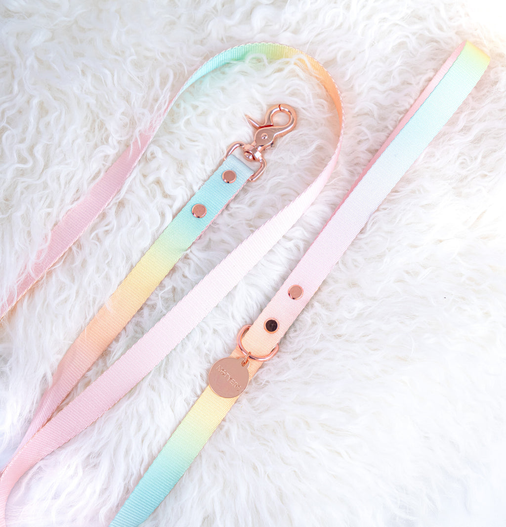 Sorbet Web Leash