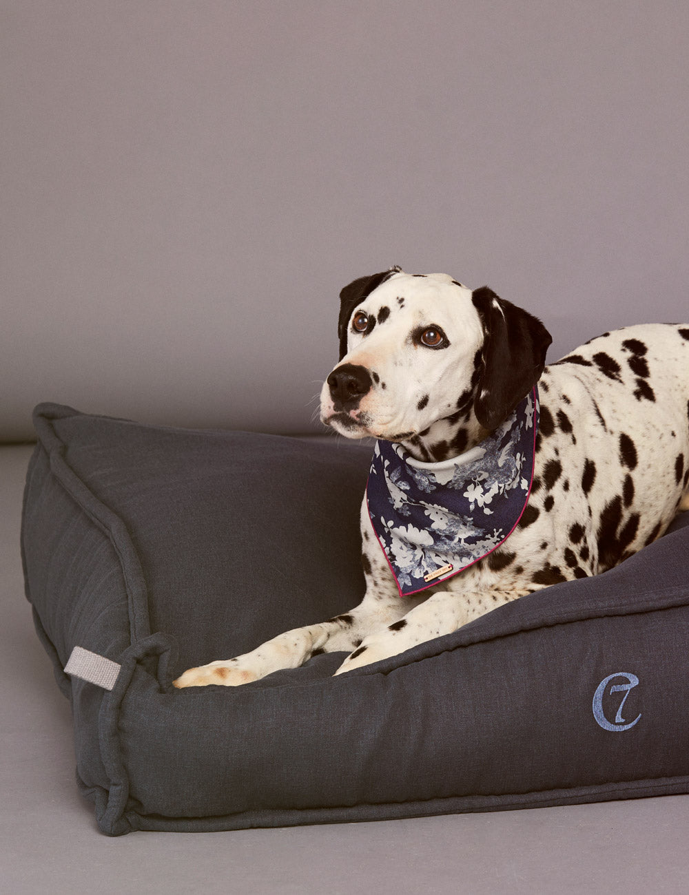 Cozy Dog Bed | Marine