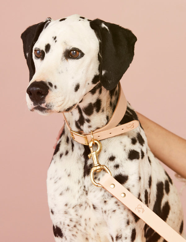 Hound Leather Dog Collar | Natural