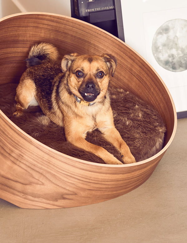 Covo Dog Lounge | Walnut