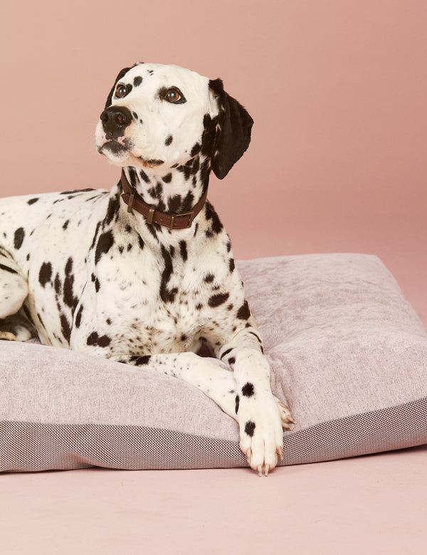 Duo Dog Cushion | Rose