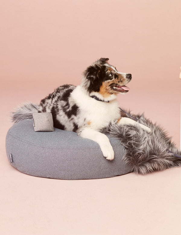 Scala Dog Pouffe | Steel Blue