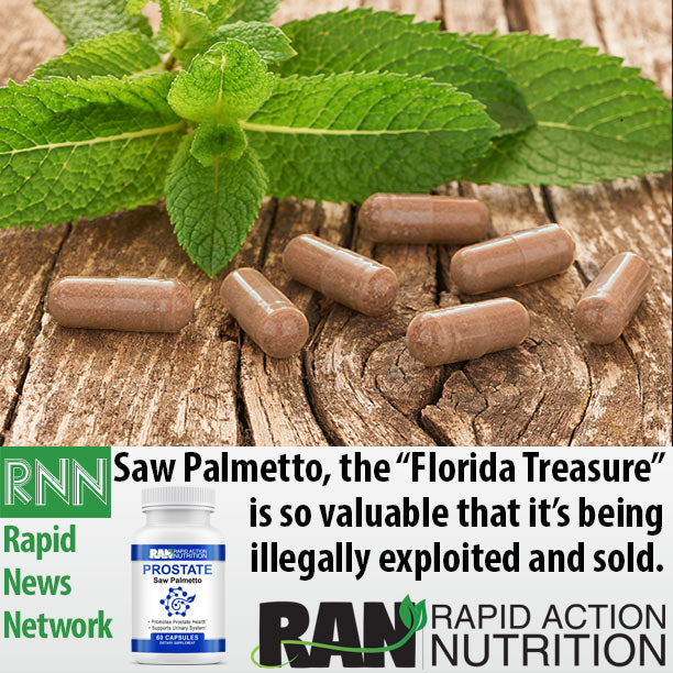 "Saw Palmetto is the ""Florida Treasure"""