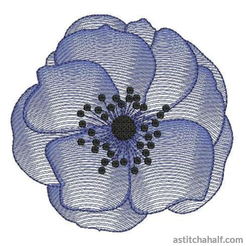 Anemone Flower Transparency - astitchahalf