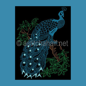 Chinese Peacock 01