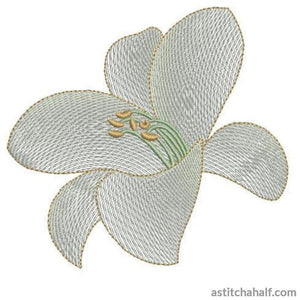 Casa Blanca Lily Flower Transparency - astitchahalf