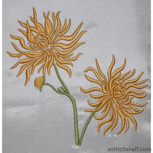 Chrysanthemum Flowers - astitchahalf
