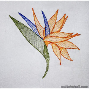 Strelitzia Flower Transparency - a-stitch-a-half