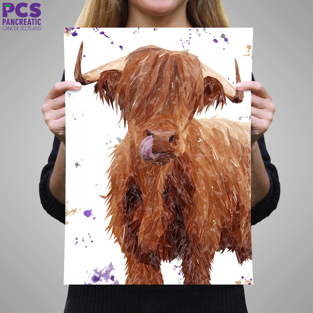 Picture of Stephen Thomas Highland Cow A1 print