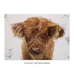 """Peeps"" The Highland Calf A4 Unframed Art Print"