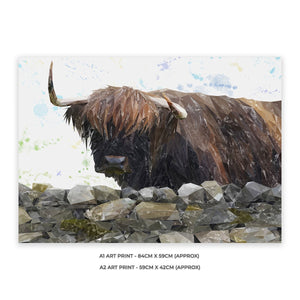 """Freya"" The Highland Cow from Applecross A1 Unframed Art Print - Andy Thomas Artworks"